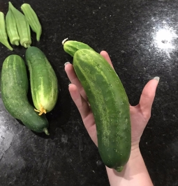 First cucumber harvest of 2017
