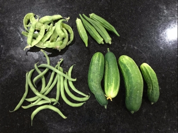 Harvested green bush beans, cucumbers, okra, and sugar snap peas