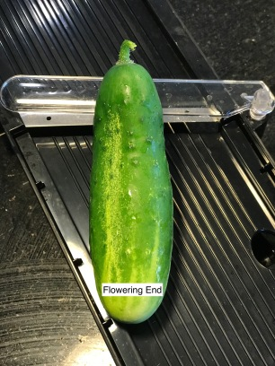 Cut off flowering end of cucumbers to throw away before pickling