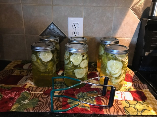Easy Bread & Butter Pickles sitting for 24 hours