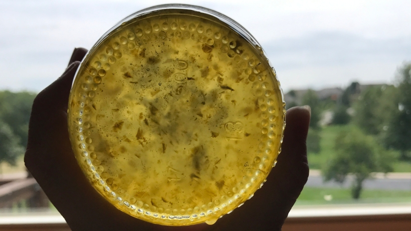 Jalapeno Jelly held up to the light